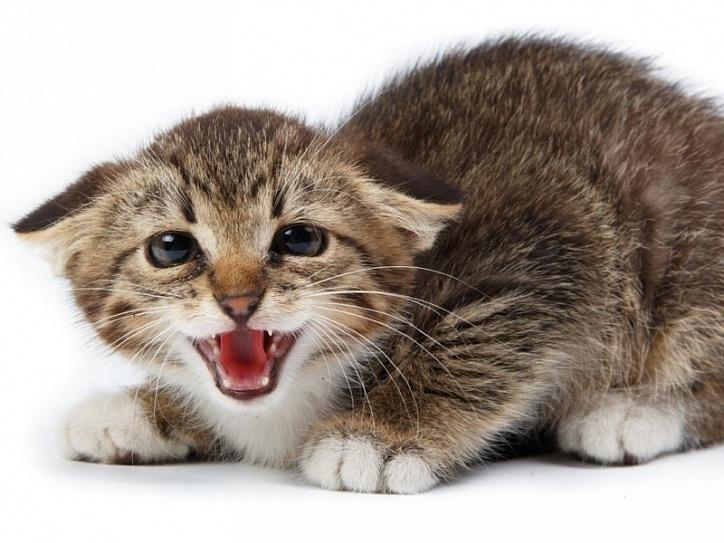 Стресс у кошек и собак
